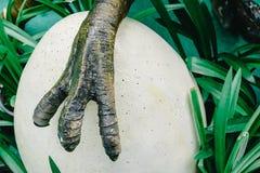 Uova proteggenti del predatore selvaggio della natura del piede del dinosauro in nido fotografie stock