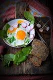 Uova rimescolate con spinaci ed il ravanello Immagine Stock Libera da Diritti