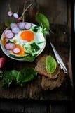Uova rimescolate con spinaci ed il ravanello Fotografie Stock