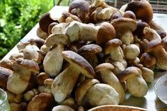 Uova rimescolate dai funghi Fotografia Stock Libera da Diritti