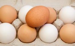 Uova in scatola fotografia stock