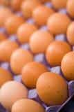 Uova in scatola Immagini Stock