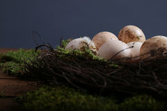 Uova sporche del pollo Immagini Stock