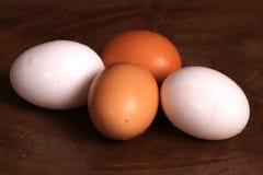 Uova su di legno Immagine Stock