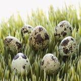 Uova su erba. Fotografia Stock