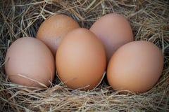 Uova su erba nell'azienda agricola Fotografia Stock Libera da Diritti