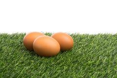 Uova su erba verde Fotografia Stock