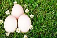 Uova su erba verde con il fiore. Fotografia Stock