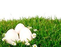 Uova su erba verde con il fiore. Fotografie Stock Libere da Diritti