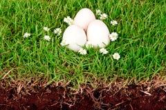 Uova su erba verde con il fiore. Fotografie Stock