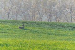 Uova su un campo verde Fotografia Stock