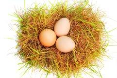 Uova su un'erba Fotografia Stock Libera da Diritti