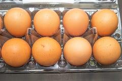 Uova su una scatola di plastica Fotografie Stock Libere da Diritti