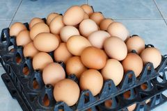 Uova sul dettaglio del vassoio dell'uovo Fotografia Stock