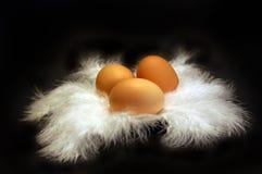 Uova sulla piuma 1 Fotografia Stock