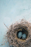 Uova in un nido fotografie stock