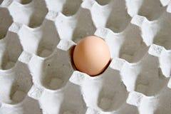 Uova una che sono nel pannello. fotografia stock
