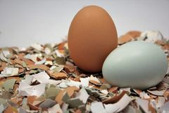 Uova variopinte con l'uovo Shell schiacciato Fotografie Stock
