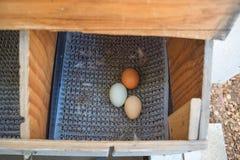 Uova variopinte in una gabbia di pollo del cortile Fotografia Stock