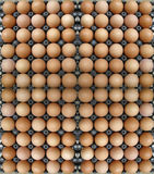 Uova in vassoio dell'uovo come fondo fotografia stock