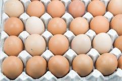 Uova in vassoio, uova di Brown in un cartone dell'uovo Fotografie Stock Libere da Diritti