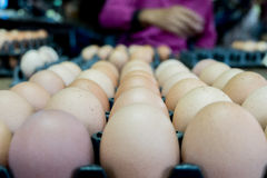 Uovo Fotografia Stock Libera da Diritti