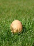 Uovo appena fatto fotografia stock libera da diritti
