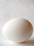 Uovo bianco Immagini Stock