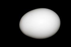 Uovo bianco del pollo Fotografia Stock