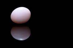Uovo bianco su priorità bassa nera Immagine Stock Libera da Diritti