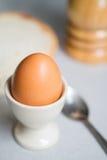 Uovo bollito immagine stock