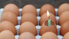 Uovo crudo della rottura contenuto in vassoio. stock footage