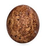 Uovo dei Caracaras del sud fotografia stock