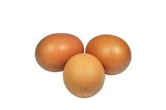 Uovo del pollo Fotografie Stock Libere da Diritti