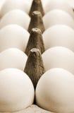 Uovo del pollo Immagine Stock