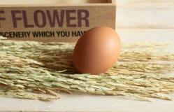 Uovo del pollo con riso sulla tavola di legno e sulla scatola di legno Fotografia Stock Libera da Diritti