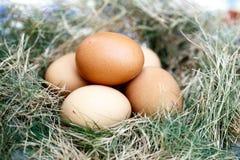 Uovo del pollo in nido Immagini Stock Libere da Diritti