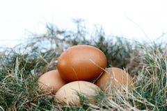 Uovo del pollo in nido Fotografia Stock Libera da Diritti