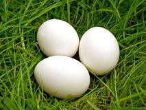 Uovo del pollo su erba verde Immagine Stock