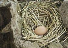 Uovo del pollo, uovo nel nido Fotografia Stock