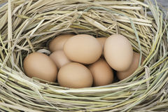 Uovo del pollo, uovo nel nido Immagini Stock