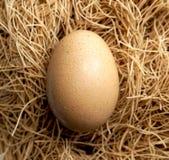 Uovo del primo piano e fondo marrone del nido immagini stock
