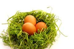 Uovo dell'estere su verde Fotografia Stock