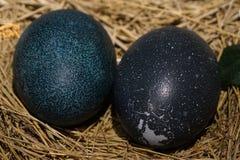 Uovo dell'uccello dell'emù Immagini Stock
