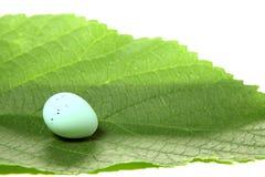 Uovo dell'uccello sul foglio Immagine Stock
