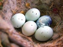 Uovo della terra Immagini Stock