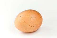 Uovo di Brown Fotografia Stock