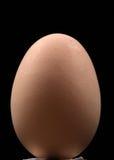 Uovo di Brown Fotografie Stock Libere da Diritti