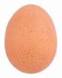 Uovo di Brown immagini stock
