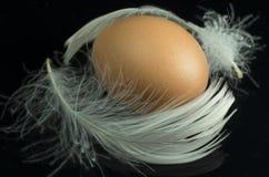 Uovo di Brown con piuma bianca fotografie stock